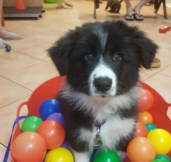 dog playing in box of balls